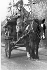 horse_and_cart.jpg