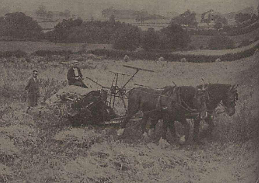 harvesting_1939.jpg